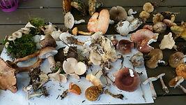 Groupement mycologiue du Pied du Jura Cossonay -Partage