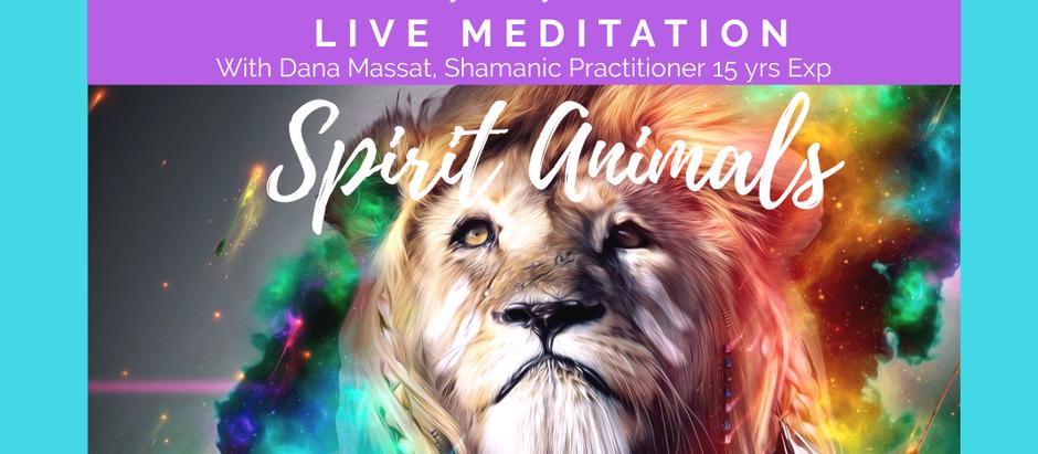 Spirit Animal Meditation-LIVE Virtual on Sunday, May 17th at 10am