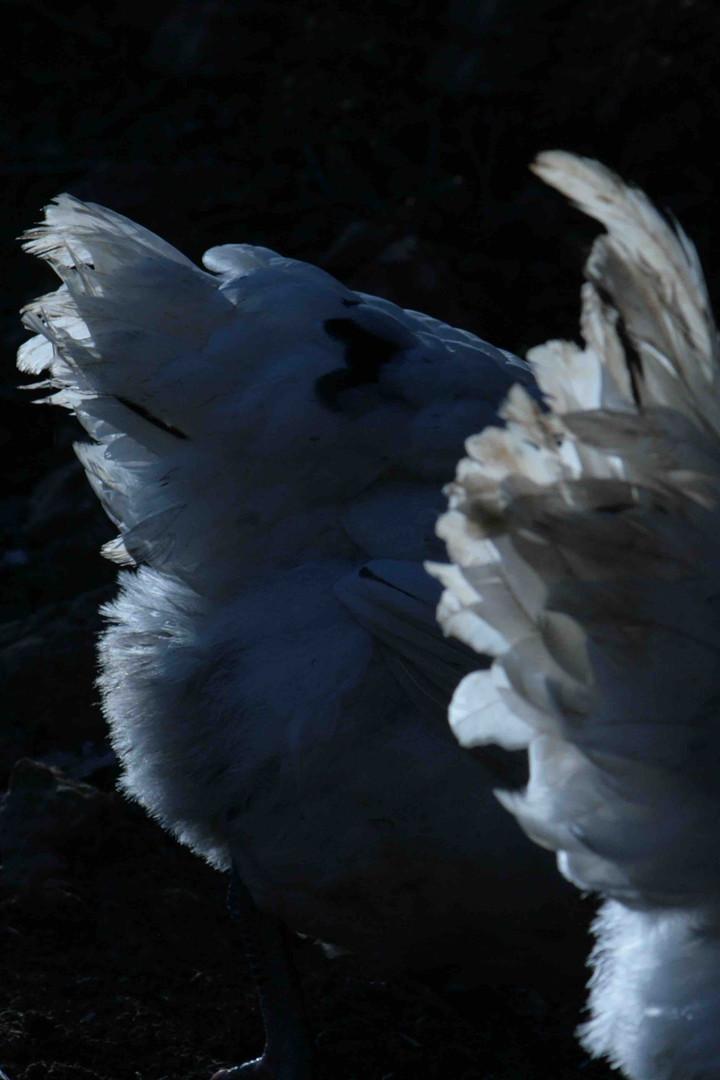 plumes.jpg