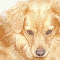 Собако-весеннее