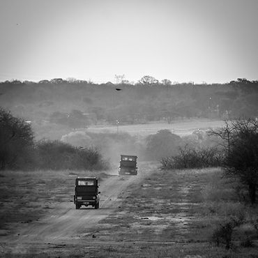Photo, photography, safari, big 5, Africa