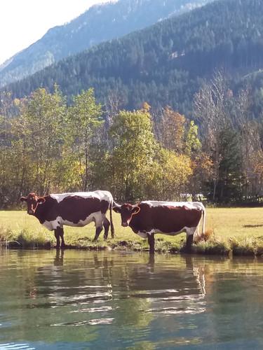 CHALETS ZÖHRER - Wohnen am Wasser, Wande