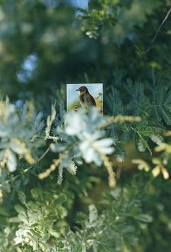 BIRDS_05.jpg