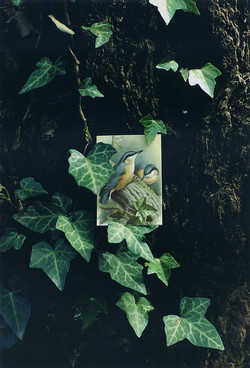 BIRDS_07.jpg