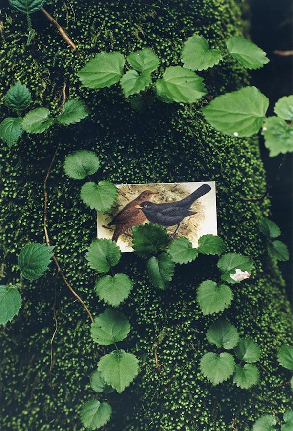 BIRDS_09.jpg