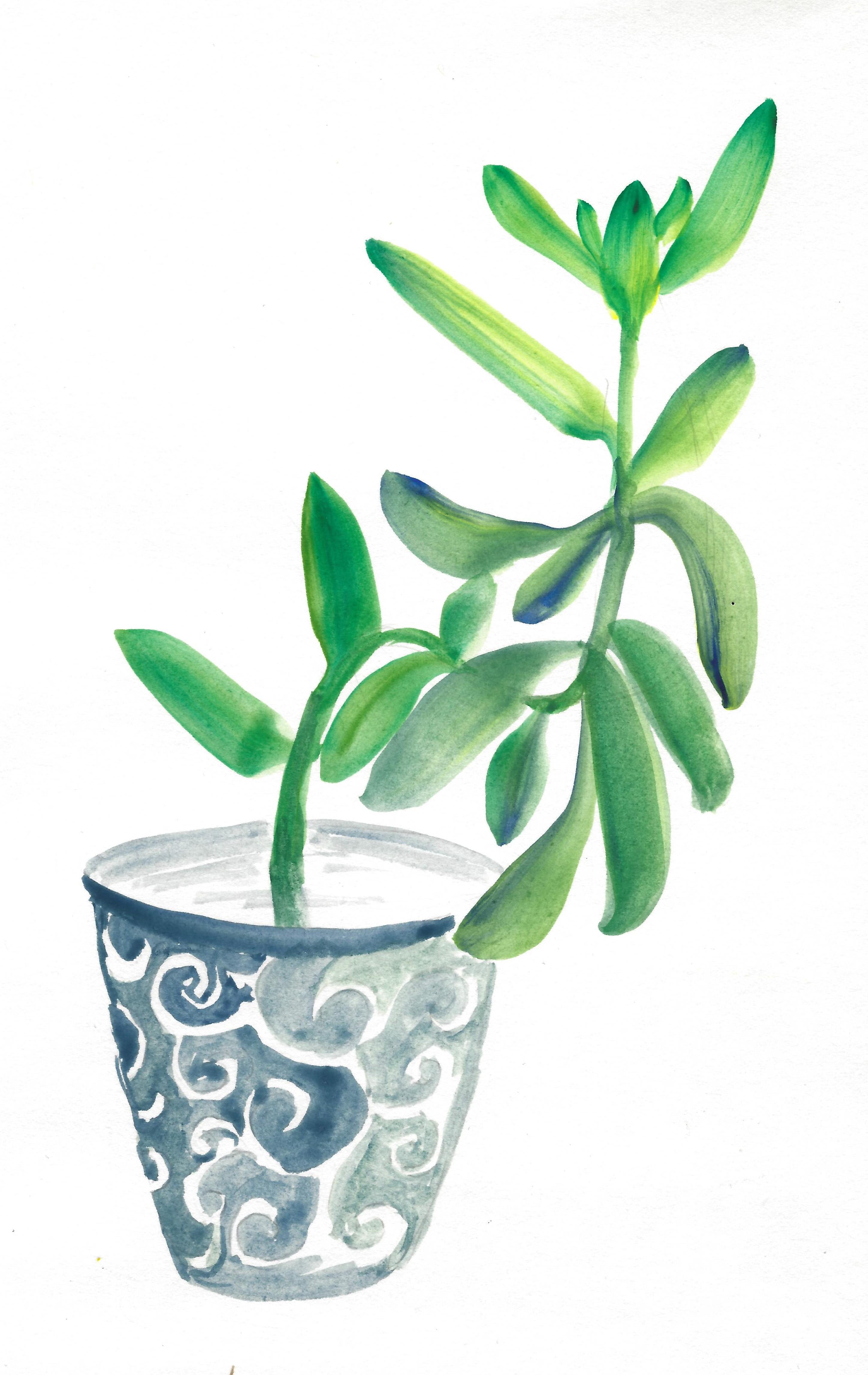 THAM 03 Succulent1