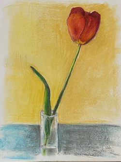 Powell-Red Tulip