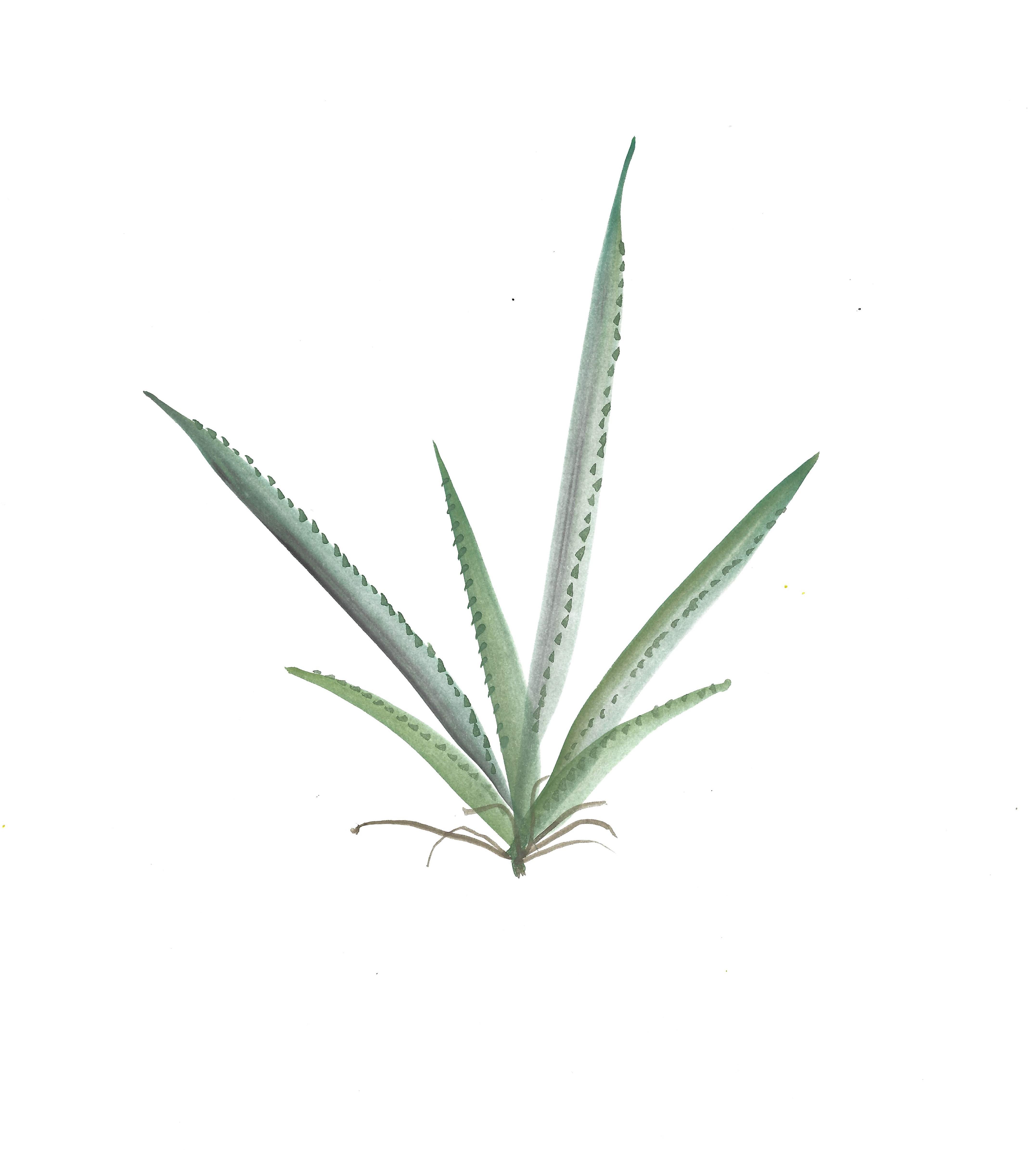 THAM 04 Succulent2