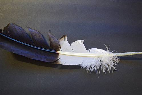 Genuine Eagle Feather - naturally harvested. Smudging & rituals