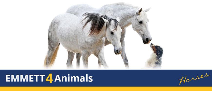 EMMETT4ANIMALS HORSES.jpg