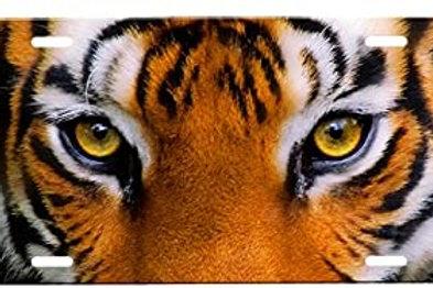 Tiger Eye Palm Stone - VERY HIGH GRADE 4 SIZES