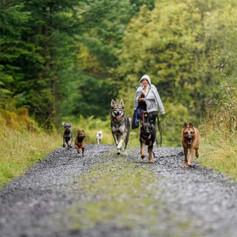 all dogs walk.jpg