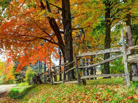 Writerly Wednesday – Autumn Years