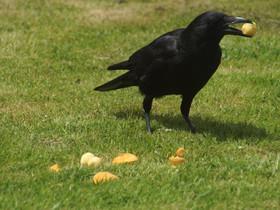 Writerly Wednesday – Eating Crow