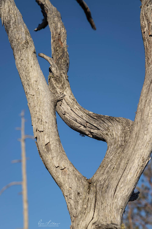Dead tree in Finland. Wilderness, bog, mire. Nordic Landscape.
