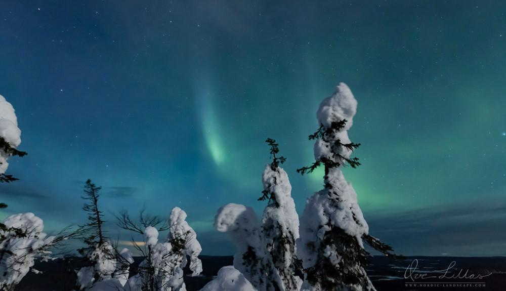 Aurora Borealis in a winter landscape
