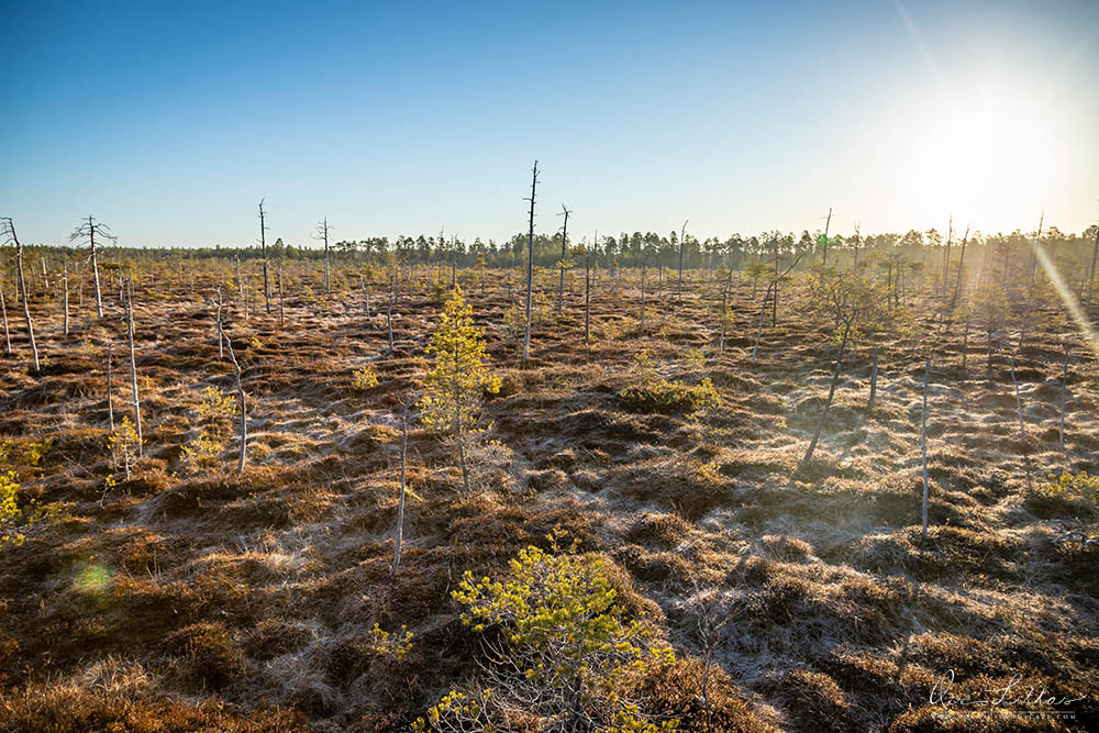 Mire of Finland. Morning in the nature.