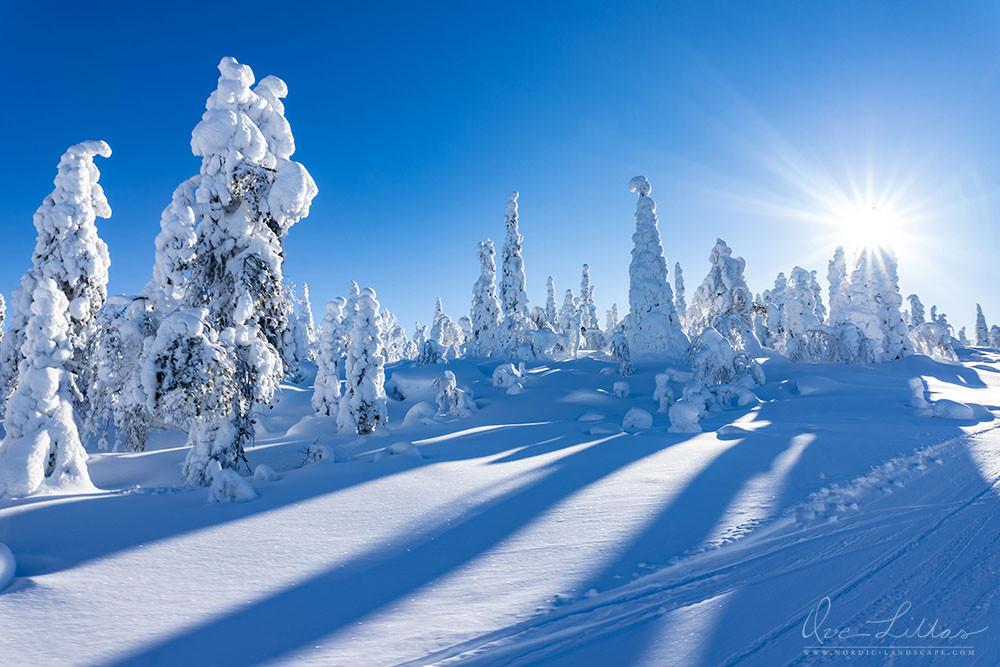 Snowy trees in a winter landscape