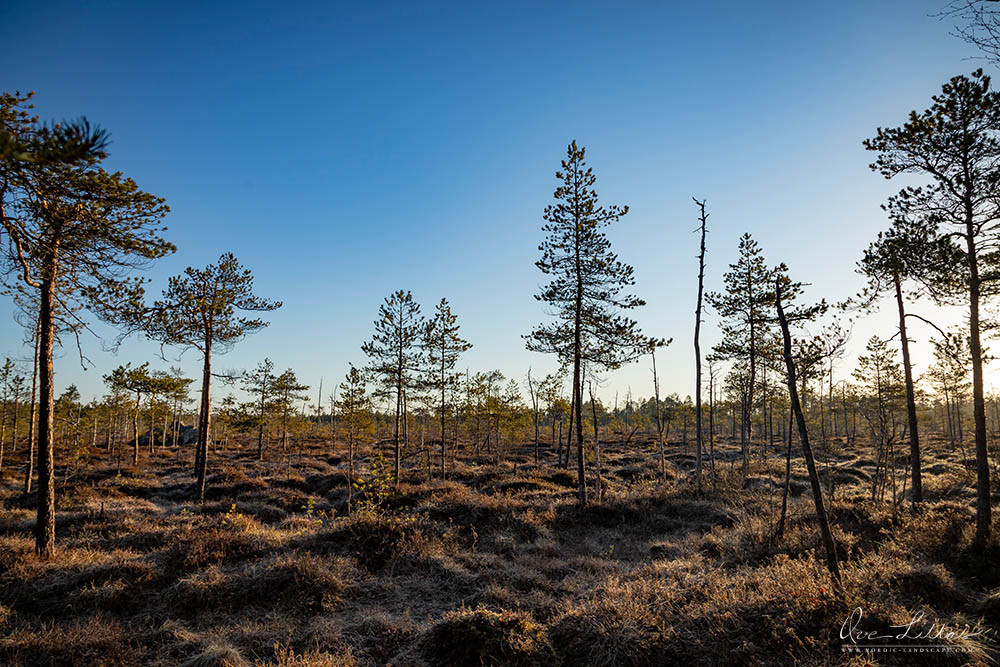 Mire (bog or fen) in Finland. Beautiful nature.