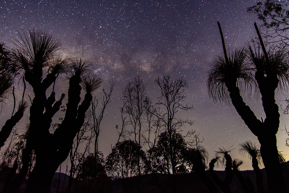 Canungra Grass Trees (ISO 1250, 16mm, f/2.8, 25 sec)