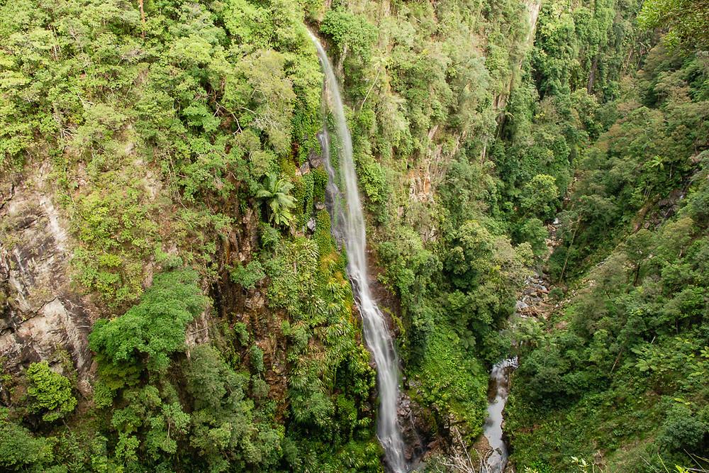 Coomera and Yarrabilgong Falls