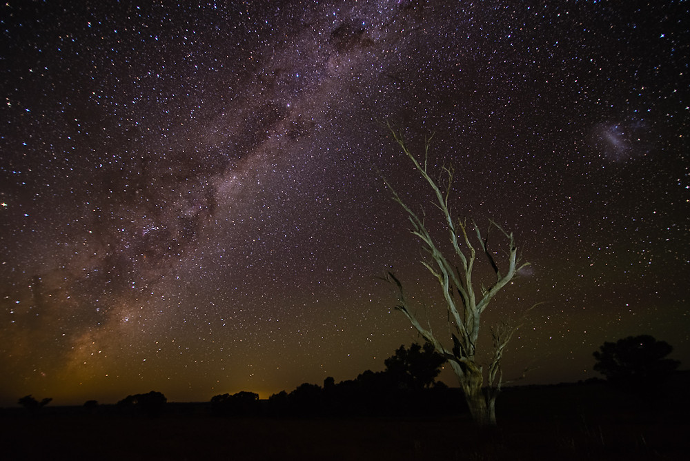 Dead Tree and Milky Way - Yeoval, NSW