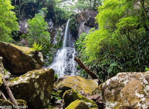 Toolona Falls - Lamington National Park