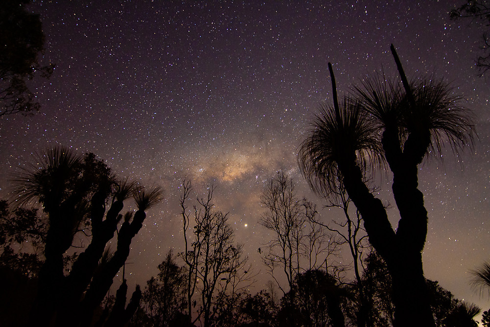 Canungra Grass Trees (ISO 1000, 14mm, f/2.8, 30 sec)