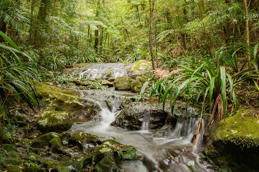 Dragoon Bird Creek