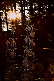 Transparent in nature