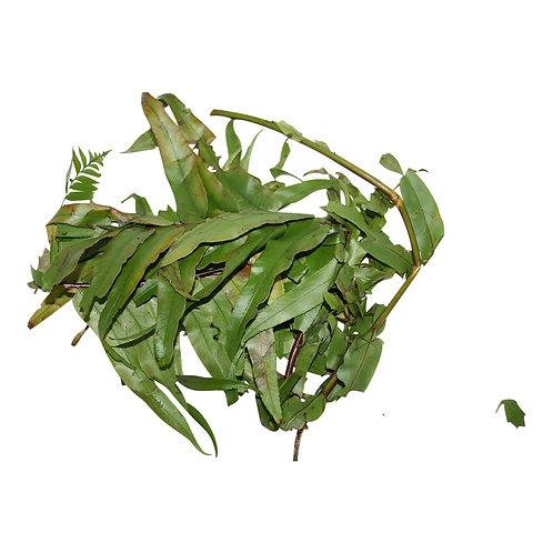 Bundle of 7 Sweet Herbs (Fresh) - Attraction, Money, Road Opening