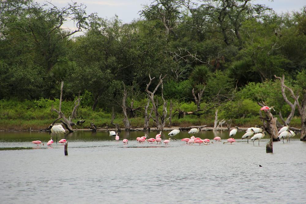 El pantanal es uno de los núcleos de la biodiversidad y la vida salvaje de Paraguay. Autora: Mónica Bareiro
