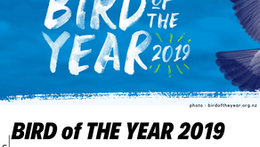 BIRD of THE YEAR 2019: Meningkatkan Kesadaran Akan Burung di Selandia Baru. Burung Pak RT Gak Ada!