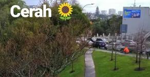 Di Auckland: Cuaca di Auckland Bikin Orang Indonesia Geleng-Geleng. Apalagi Lihat Harga Mangga.