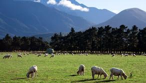 Inilah Keadaan Perekonomian di Negara New Zealand
