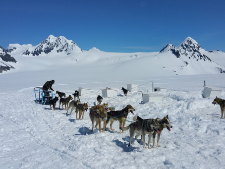 Dog Sledding on a Glacier? Check!