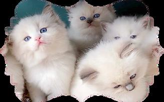 Cat Image_Shape.png