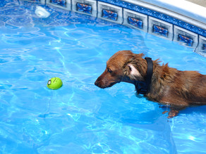 How to make swimming safe for your pets
