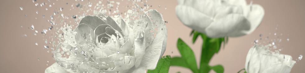 Thalia Sodi Fragrance Collection