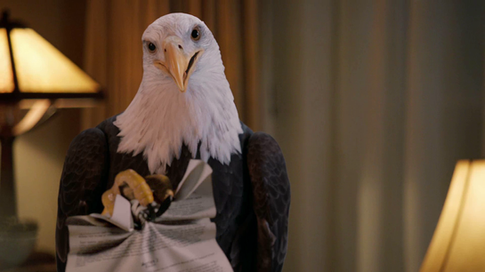 Cox - Eagle