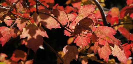 Herbstferien von Sa., 19.9. bis So., 11.10.2020