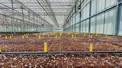 Mais 100 mil sementes marcam o arranque da nova fase do projeto de I&D florestal da Sonae Arauco