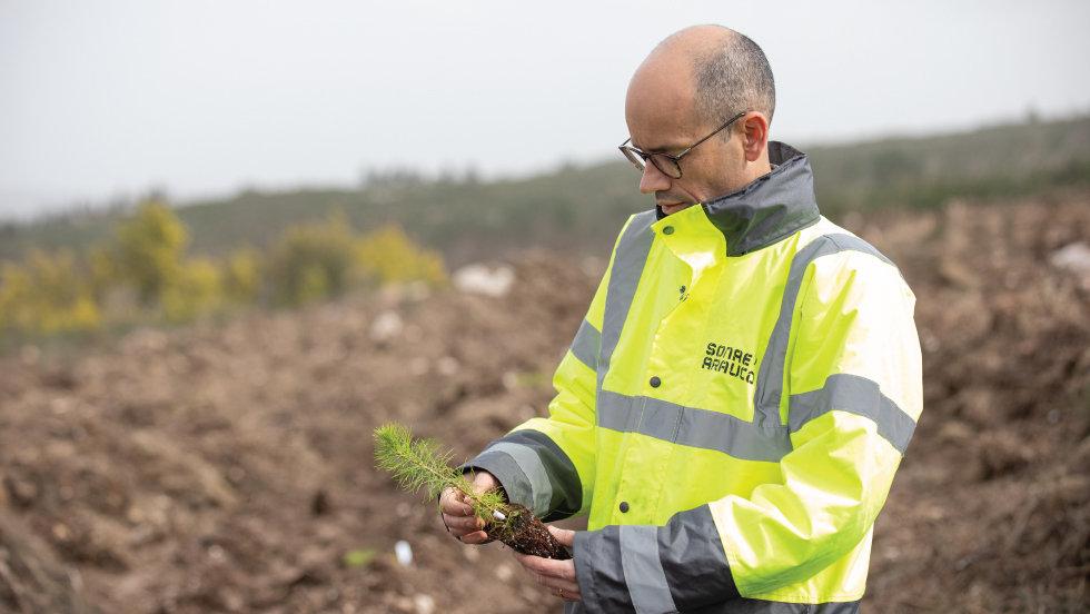 Sonae Arauco planta 21.600 pinheiros na segunda fase de Projeto de I&D florestal
