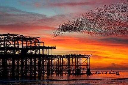 Murmuration over the ruins of Brighton's