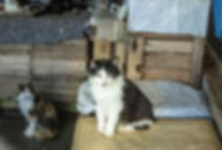 Ajuda comunitária com caes e gatos