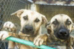 Ação social com ajuda aos animais abandondos