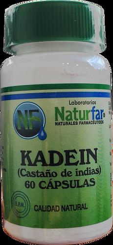 Castaño de indias (Kadein) * 60 Cáp