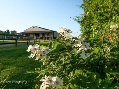 Susan's Pictures-27.jpg