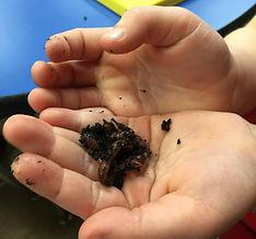 Students observe worm bin in learning garden
