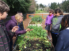 Lessons in the learning garden